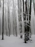 Winter fog forest in the mountain. Magic fog forest in the winter. Mountain Bieszczady, Poland. Winter scenery Royalty Free Stock Photography