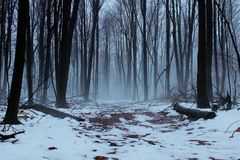 Winter Fog Royalty Free Stock Photo