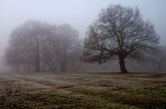 Winter fog in local park Royalty Free Stock Image