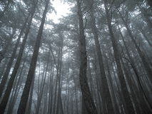 Winter fog in the mountain forest Stock Photos