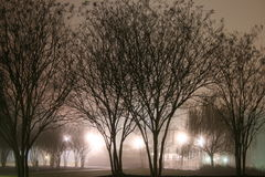 Winter Fog In The Park Stock Images