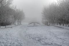 Winter with fog Royalty Free Stock Photo