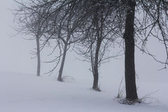 Winter fog Stock Image