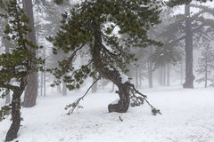 Winter foggy day Stock Photography