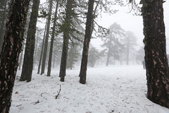 Winter foggy day Royalty Free Stock Photography