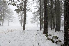 Winter foggy day Stock Photo