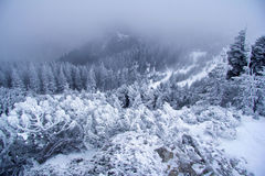 Winter foggy day in the mountains Stock Image