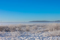 Winter foggy field Royalty Free Stock Photo