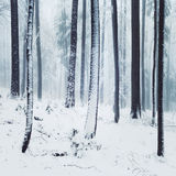 Winter foggy forest scene Royalty Free Stock Photo