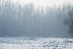 Winter foggy forest scene, Cold foggy forest with snow. Winter edition stock images