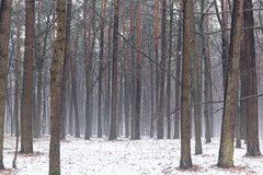 Winter foggy forest scene Stock Photography