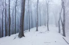 Winter in foggy frot forest with tree Royalty Free Stock Photos