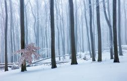 Winter in foggy frot forest with tree.  stock photos