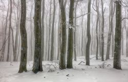 Winter in foggy frot forest with tree Stock Photos