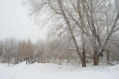 Winter foggy landscape Royalty Free Stock Photos
