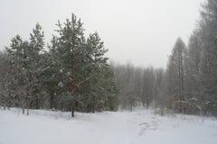 Winter foggy landscape Royalty Free Stock Photos