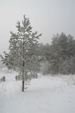 Winter foggy landscape in forest Royalty Free Stock Image