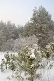 Winter foggy landscape in forest Royalty Free Stock Photography