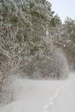 Winter foggy landscape in forest Stock Photos