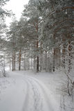 Winter foggy landscape in forest Stock Images
