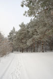 Winter foggy landscape in forest Stock Photography