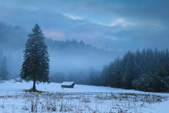 Winter foggy morning on alpine meadow Royalty Free Stock Photos