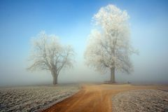On the crossroad. Winter foggy morning on the countryside crossroad. The scenery in front of me made to stop and take this picture. Two white frozen trees stand Stock Image