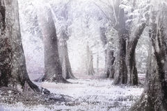 Winter foggy and snow storm solf and blure focus. Royalty Free Stock Photos