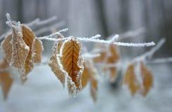 Winter foliage Stock Photo