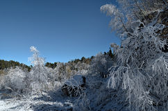 Winter in the foothills. Christmas. Hoarfrost on branches of a t. Russia, the Caucasus, the Republic of Adygea. Winter in the foothills. Christmas. Hoarfrost on Stock Photo