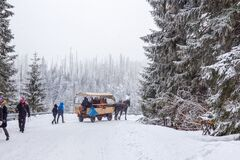 Free Winter Footpath And Horse Carriage  . People . Path To  Lake Morski Oko  . Nature Tatra Reserve Royalty Free Stock Image - 203047156