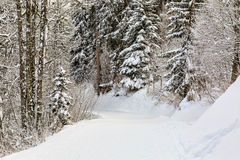 Winter Footpath Royalty Free Stock Photo