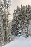 Winter Footpath Royalty Free Stock Images