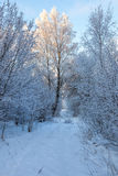 Winter footpath in a forest Stock Photo