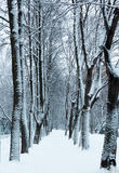 Winter footpath in the park under snow Stock Photos
