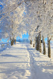 Winter footpath Stock Photos