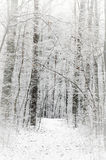Winter footpath in snowy forest Royalty Free Stock Photos