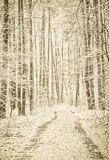 Winter footpath in snowy forest Stock Images