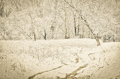 Winter footpath in snowy forest Royalty Free Stock Images