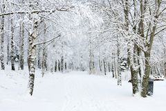 Winter footpaths Royalty Free Stock Image