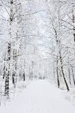 Winter footpaths Royalty Free Stock Photos