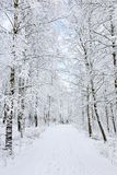 Winter footpaths Royalty Free Stock Images