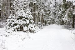 Winter footpaths Royalty Free Stock Photo