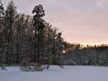 Winter forerst. Winter Park at sunset in early January Royalty Free Stock Image