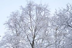 Winter foresе horizontal Stock Photo