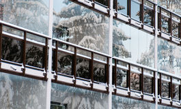 Winter foreside. Of the building with reflections of the fir trees in windows Stock Image