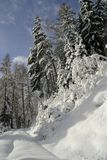 Winter forest. Snowy road in the winter fir forest Stock Photography