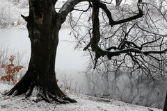 Free Winter Forest Stock Photography - 1049892
