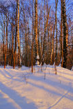 Winter forest. Snowy forest at wonderful winter evening Stock Photos
