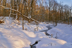 Winter forest. Snowy forest at wonderful winter evening Royalty Free Stock Photo